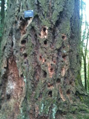 Nature's Glory Holes